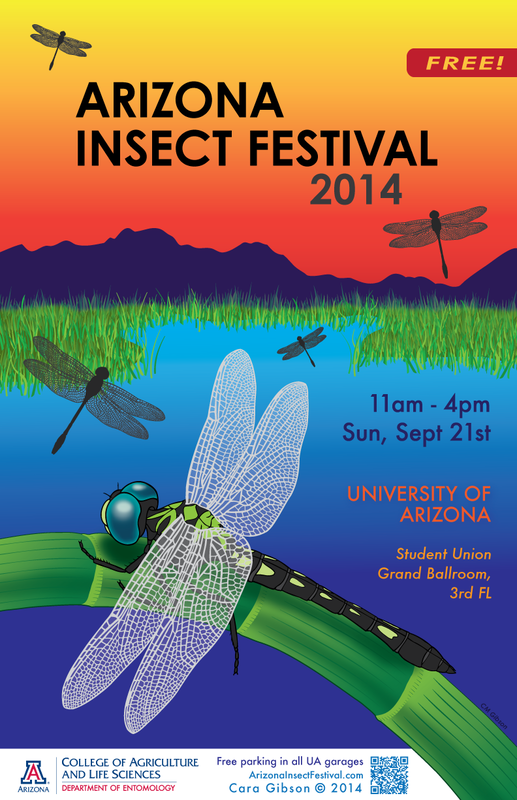 Poster illustration with Micrathyria hagenii (Odonata: Libellulidae) to announce the 2014 AZ Insect Festival. Artwork: Cara Gibson